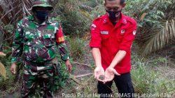 Babinsa Koramil 10/Barteng Laksanakan Patroli Terpadu Pencegahan Karhutla